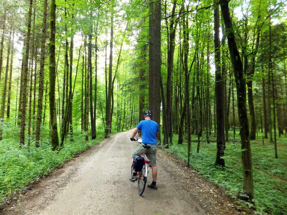 Forest Cycling Outside Ljubljana