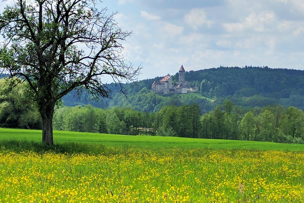 Wildflowers and Castle