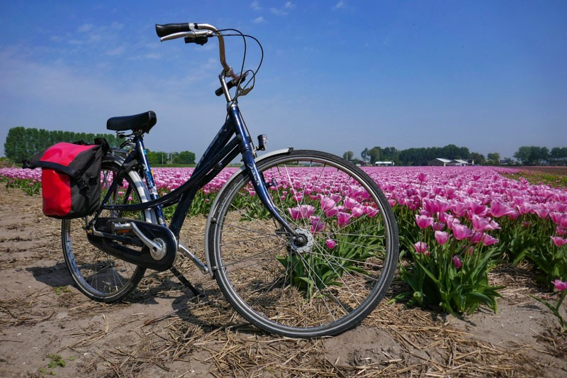 Tulip Tour by Boat & Bike