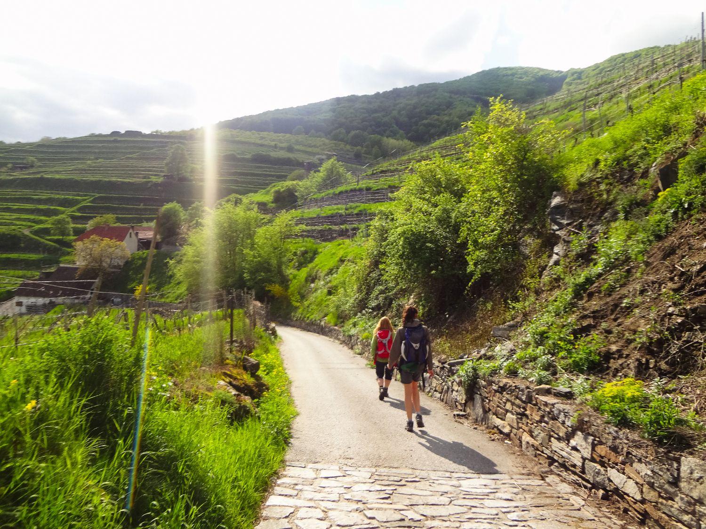 Wachau - Vineyards