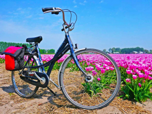 Tulip tour bike