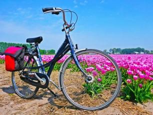 Tulip tour bike